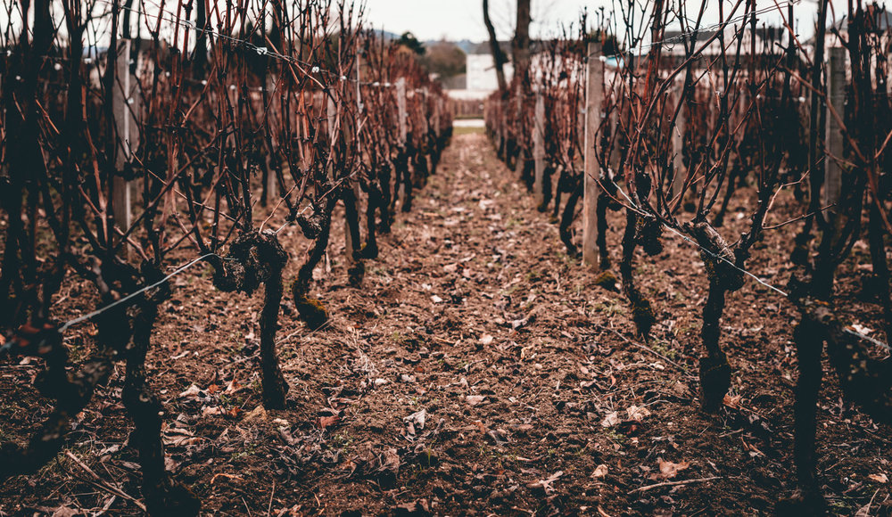 France : Champagne : The vineyard behind Jacquesson in Dizy