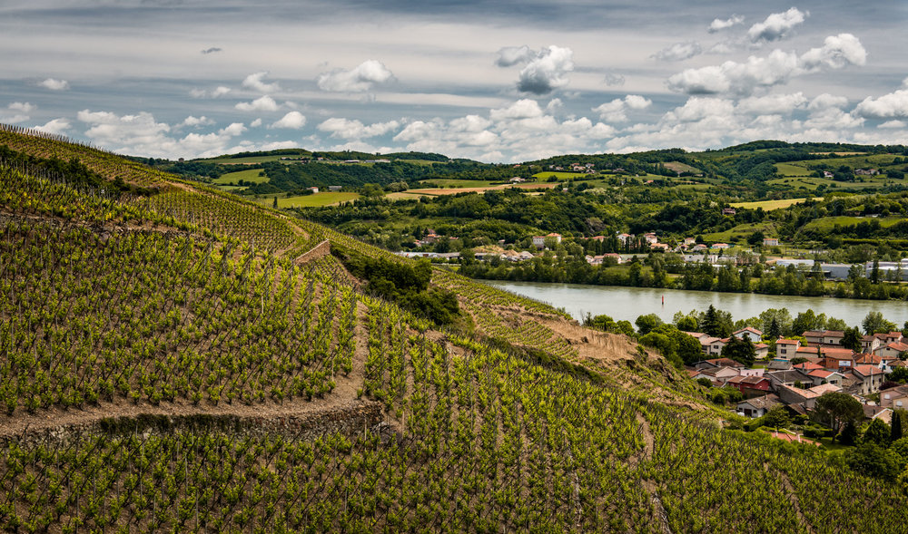 France : Northern Rhone : Cote Baudin vineyard in Cote Rotie