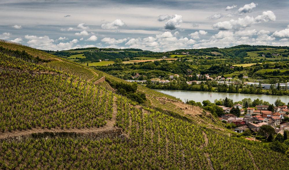 France : Northern Rhone : Cote Baudin vineyard in Cote Rotie