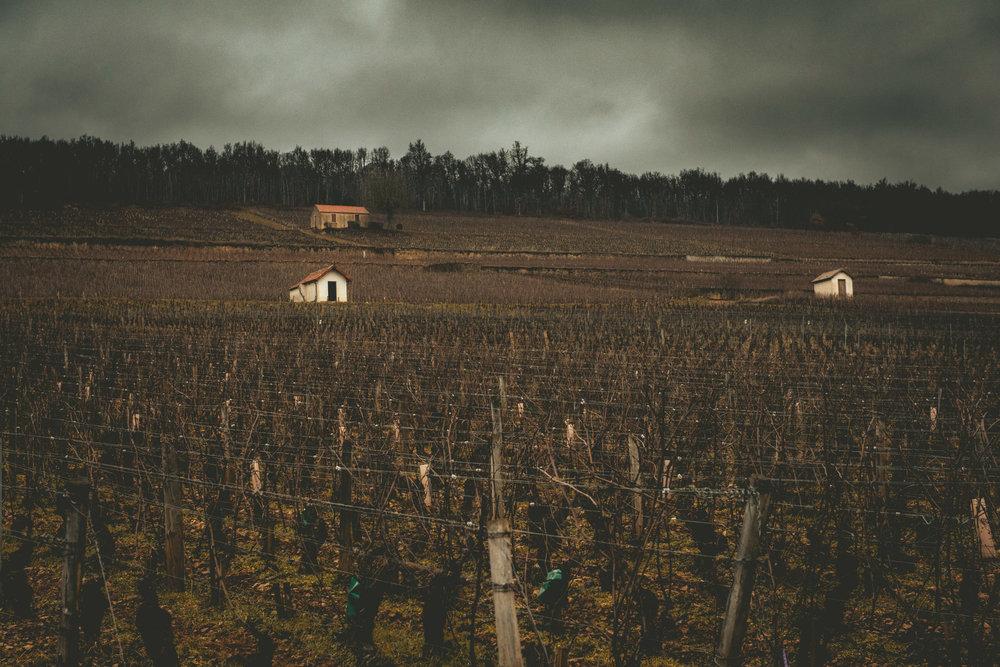 Burgundy : Cote de Beaune : Aloxe-Corton