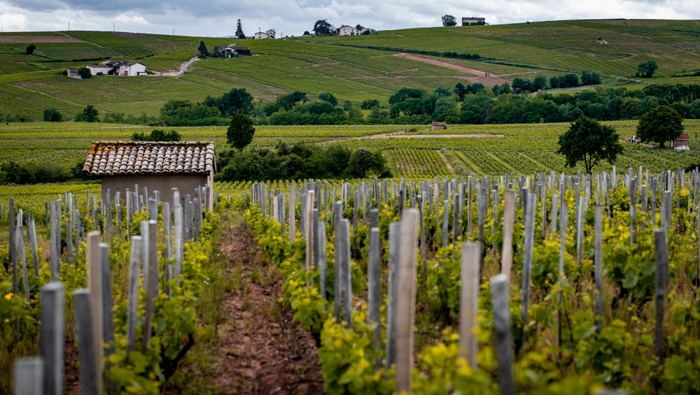 France : Beaujolais : Moulin-à-Vent