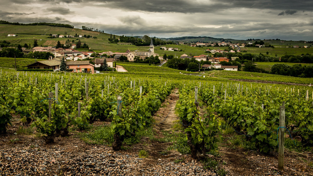 France : Beaujolais : Chenas