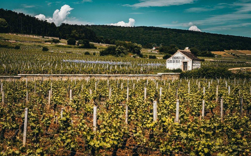 Burgundy : Cote de Nuits : Gevrey-Chambertin : Chambertin-Clos de Bèze grand cru
