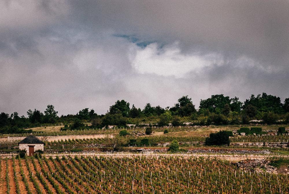 Burgundy : Cote de Beaune : Puligny-Montrachet : Montrachet