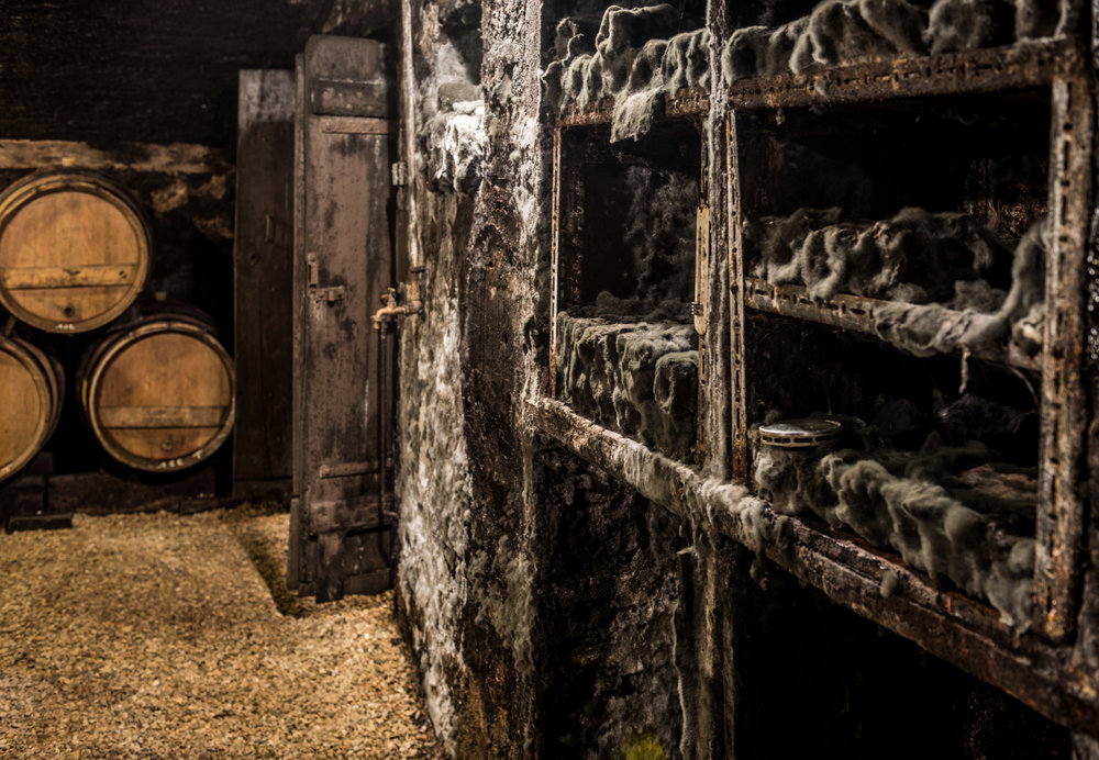 Burgundy : Cote de Beaune : Volnay : In the cellar at Joseph Voillot