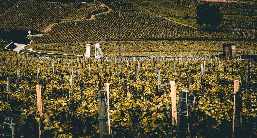 Burgundy : Cote de Nuits : Vosne-Romanée : Hallowed ground