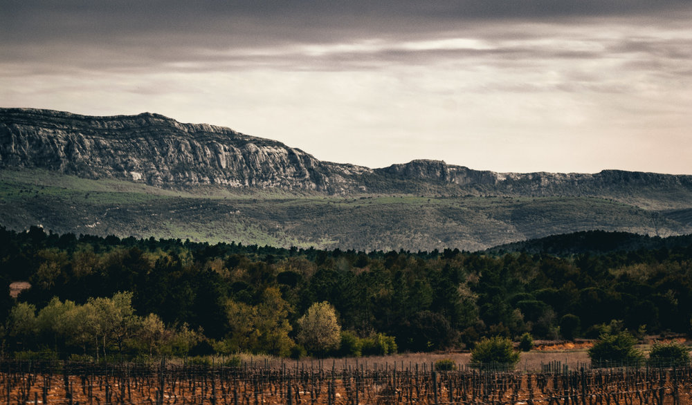 France : Provence : Vineyards and massifs