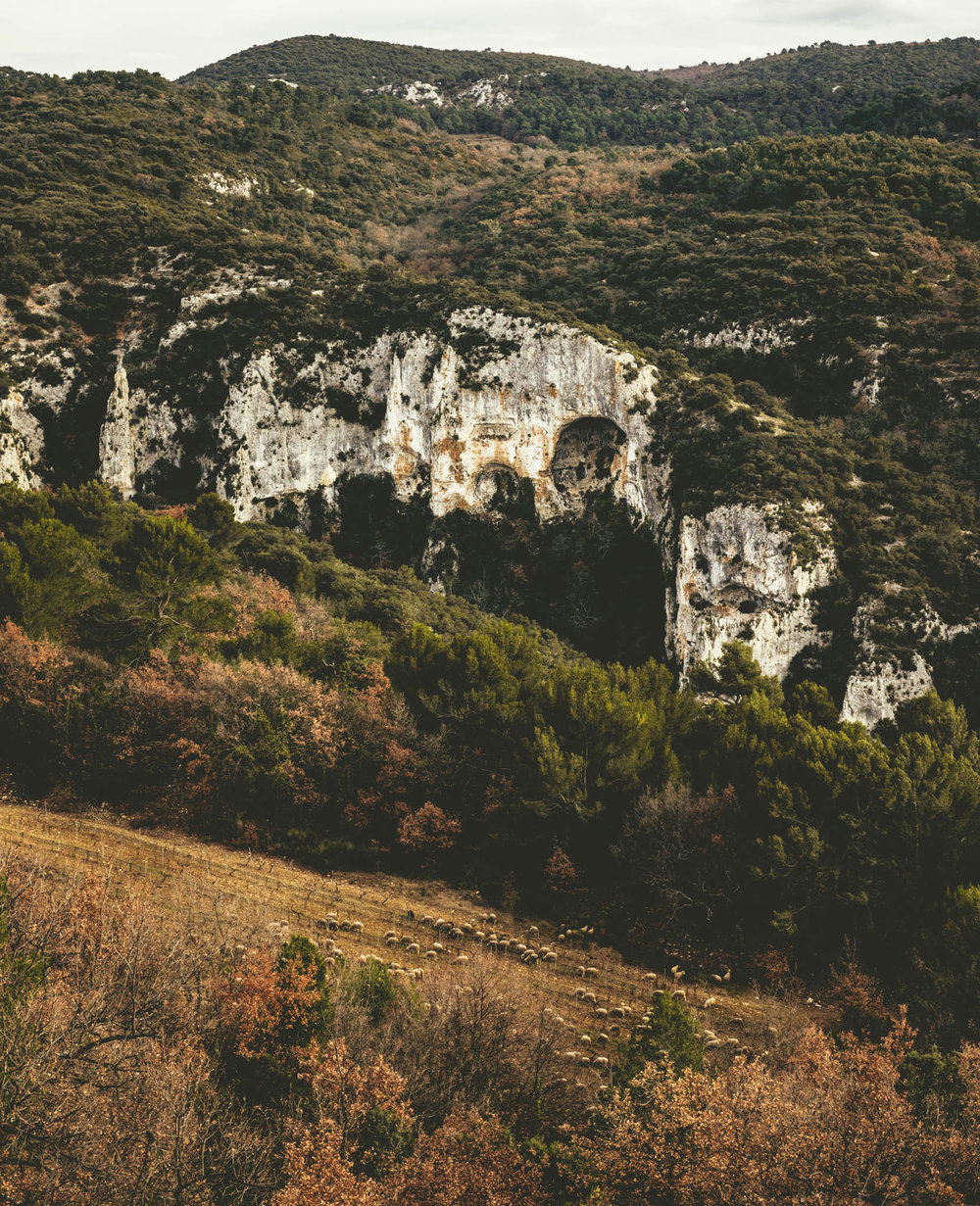 France : Southern Rhone : Cotes du Ventoux