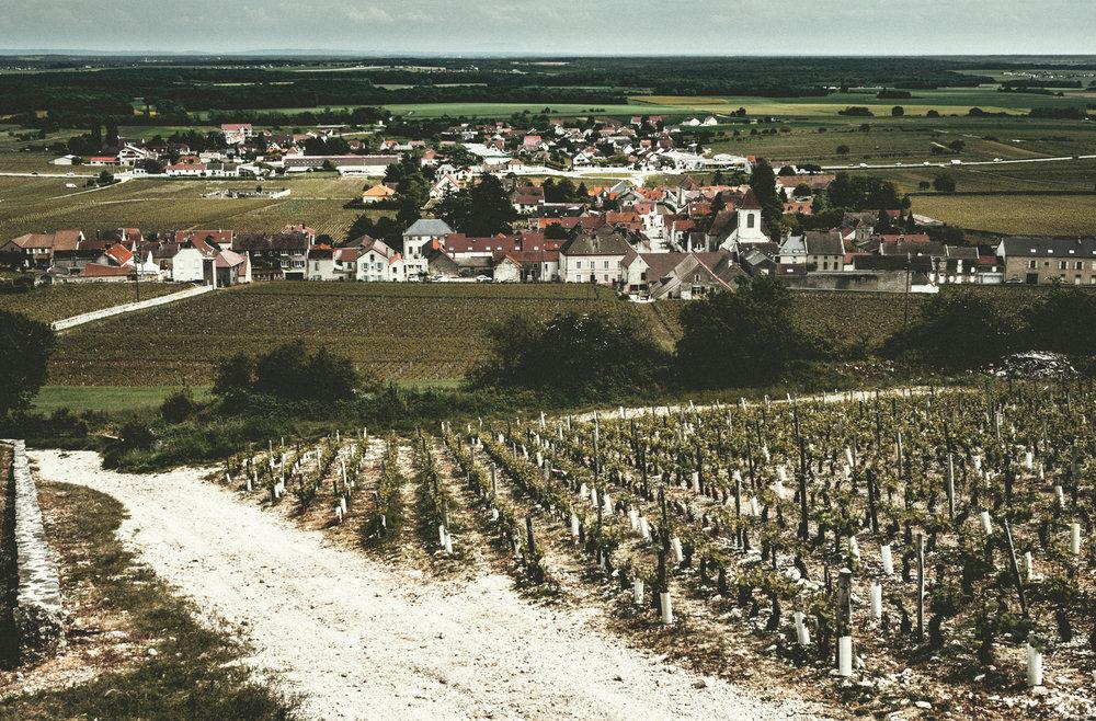 Burgundy : Cote de Nuits : Morey-St-Denis
