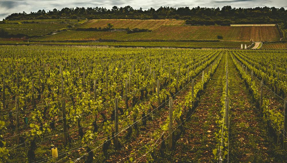 Burgundy : Cote de Beaune : Puligny-Montrachet : Bienvenues-Bâtard-Montrachet