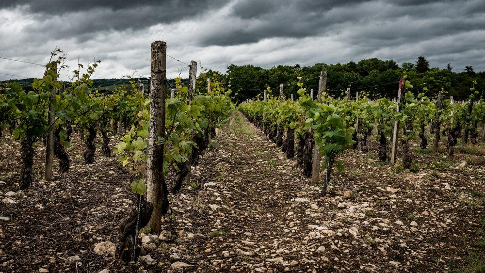 Burgundy : Maconnais : Pouilly-Fuissé