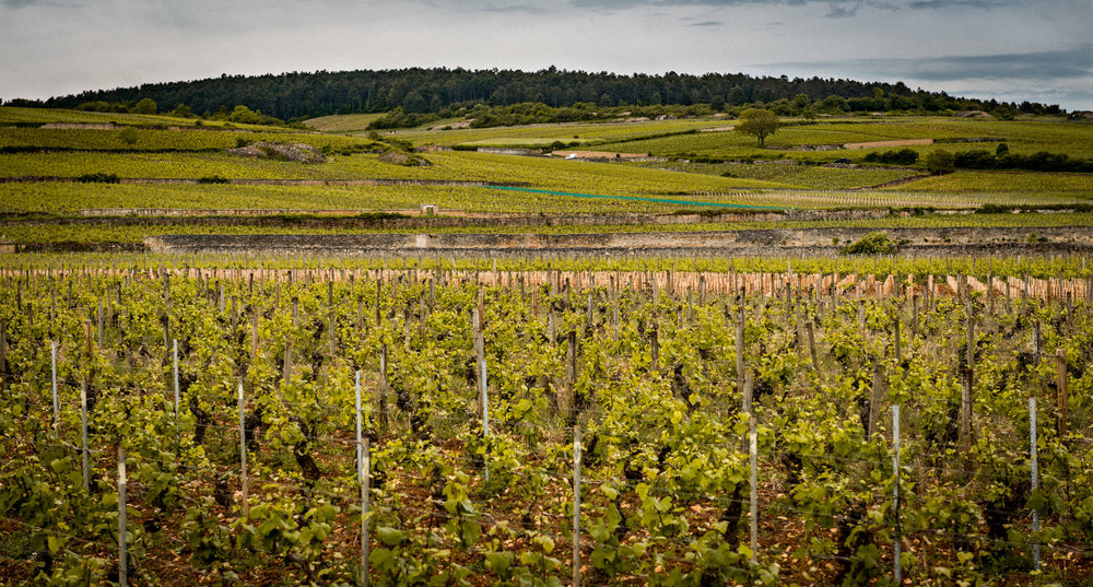 Burgundy : Cote de Beaune : Pommard : Les Grands Epenots