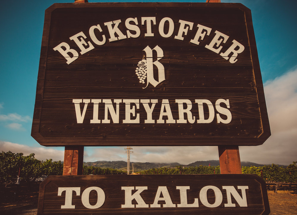 California : Napa Valley : Beckstoffer To-Kalon vineyard in Oakville