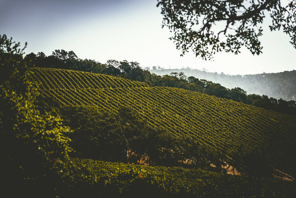 California : Napa Valley : The view along Conn Valley Rd