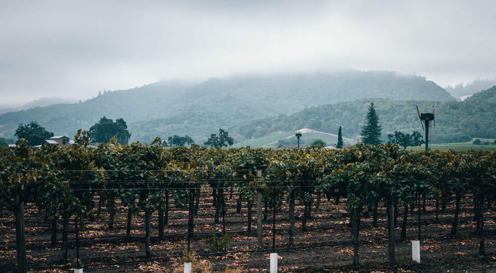 California : Napa Valley : Morning fog near Paradigm winery in Oakville