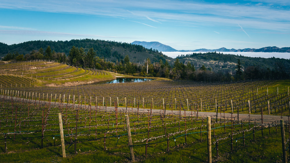 California : Napa Valley : Above the fog on Spring Mountain