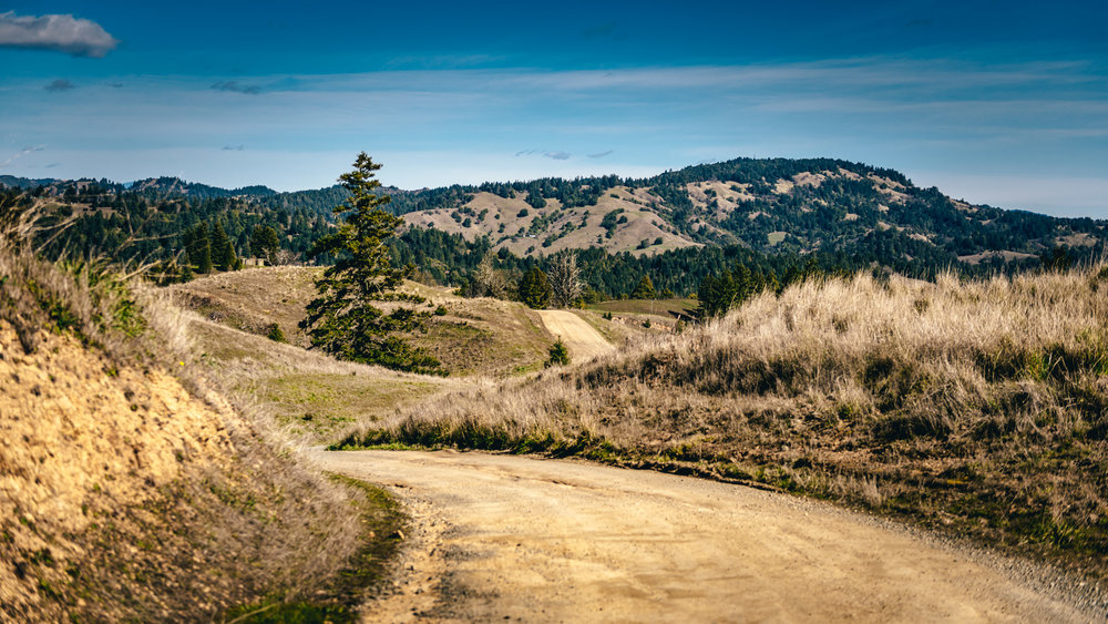 California : Sonoma : Cazadero