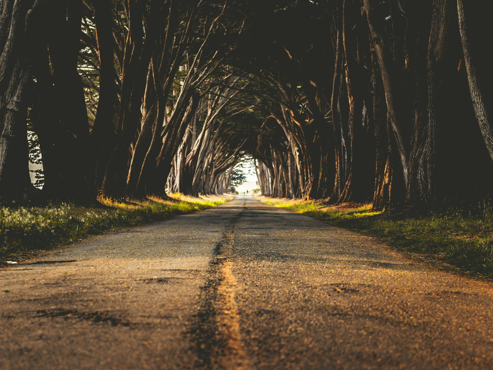California : Point Reyes : Cypress Tree Tunnel