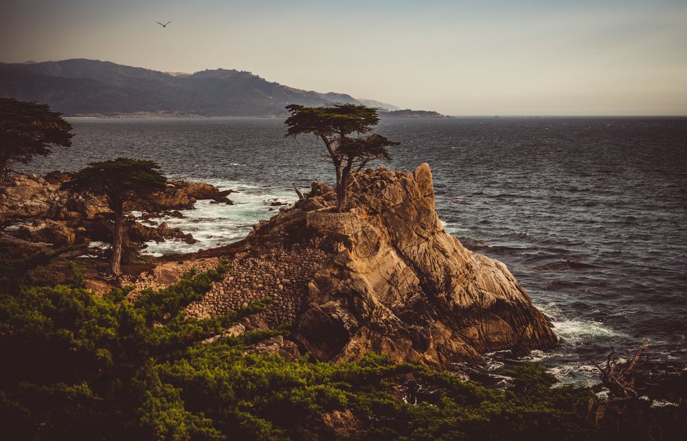California : Monterey : The Lone Cypress