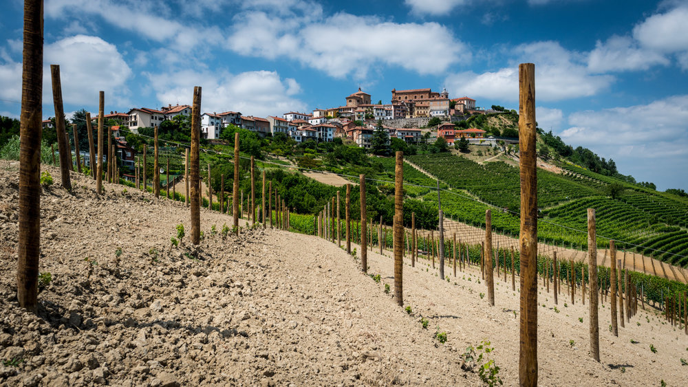 Italy : Piedmont : New plantings in La Morra