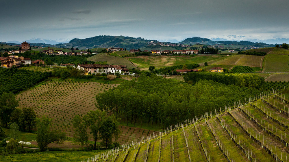 Italy : Piedmont : Ceretto's vineyards in Alba
