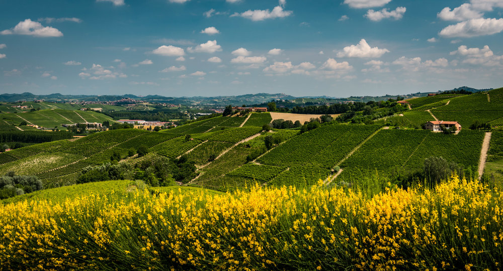 Italy : Piedmont : Monprivato vineyard, the source of Giuseppe Mascarello's iconic wine, in Castiglione Falletto