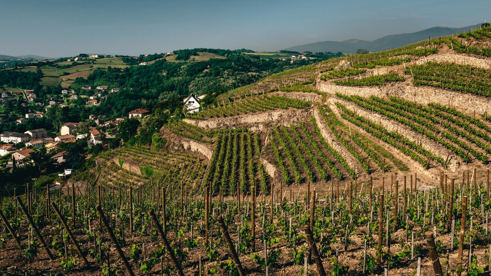 France : Northern Rhone : Condrieu's La Cote vineyard in Chavanay