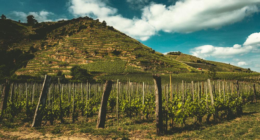 France : Northern Rhone : Cote Rotie's Le Mollard vineyard