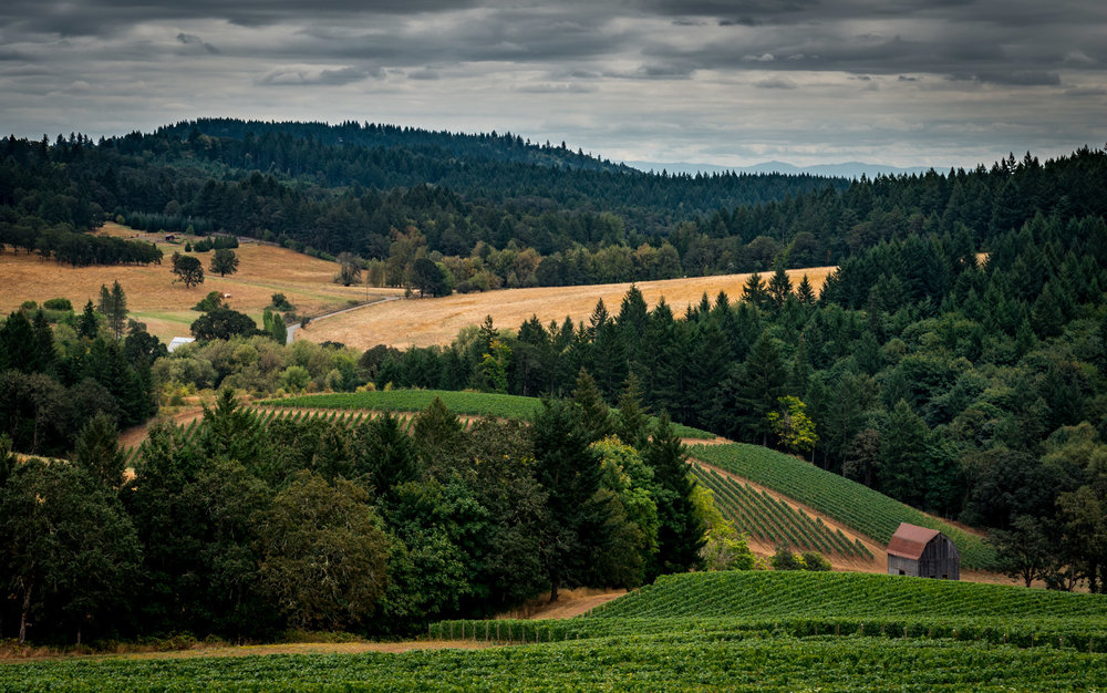 US : Oregon : Vineyards surrounding Colene Clemens in the Chehalem Mountains AVA