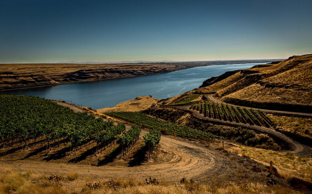 US : Washington : The Benches vineyard overlooking the Columbia River Gorge in the Horse Heaven Hills AVA