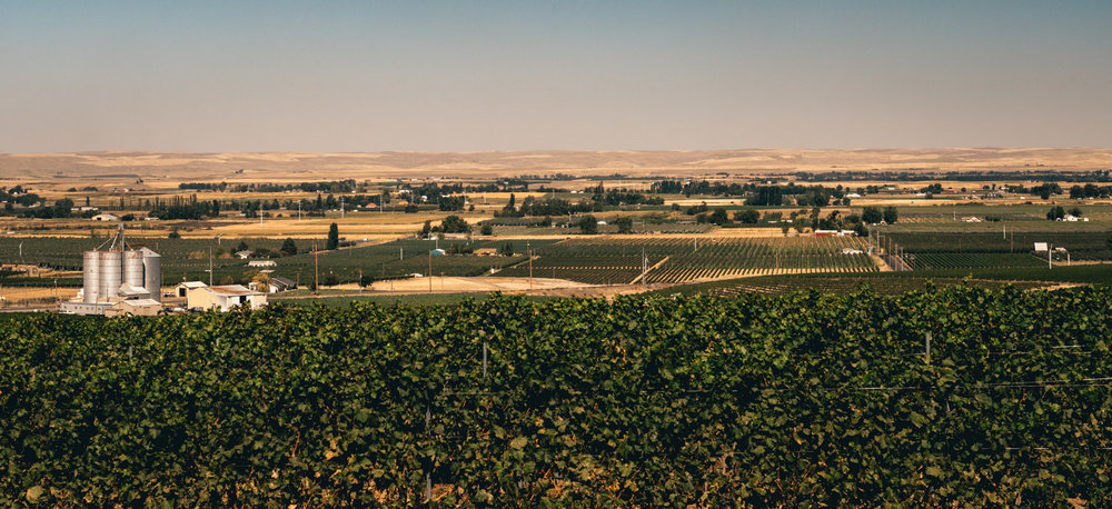 US : Washington : Vineyards in the Seven Hills area of Walla Walla