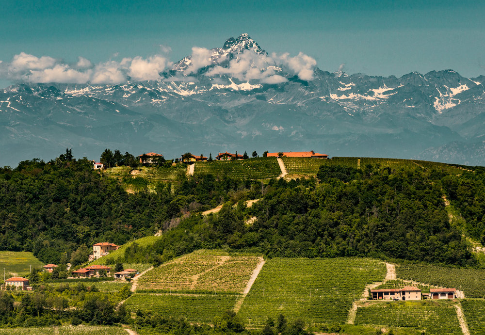 Italy : Piedmont : Monviso looms large beyond the Langhe hills