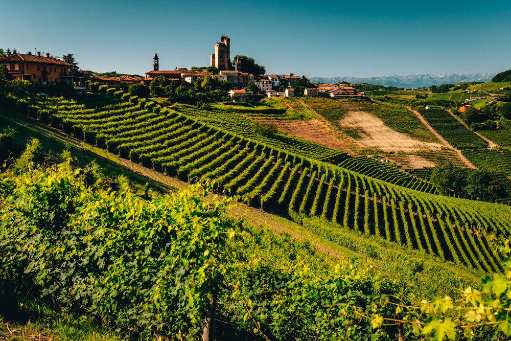 Italy : Piedmont : Lazzarito vineyard and Serralunga d'Alba