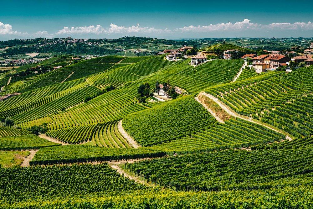 Italy : Piedmont : Rabajà vineyard in Barbaresco