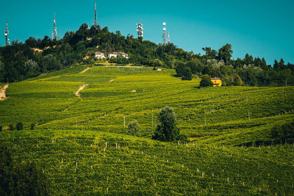 Italy : Piedmont : Brunate vineyard in La Morra