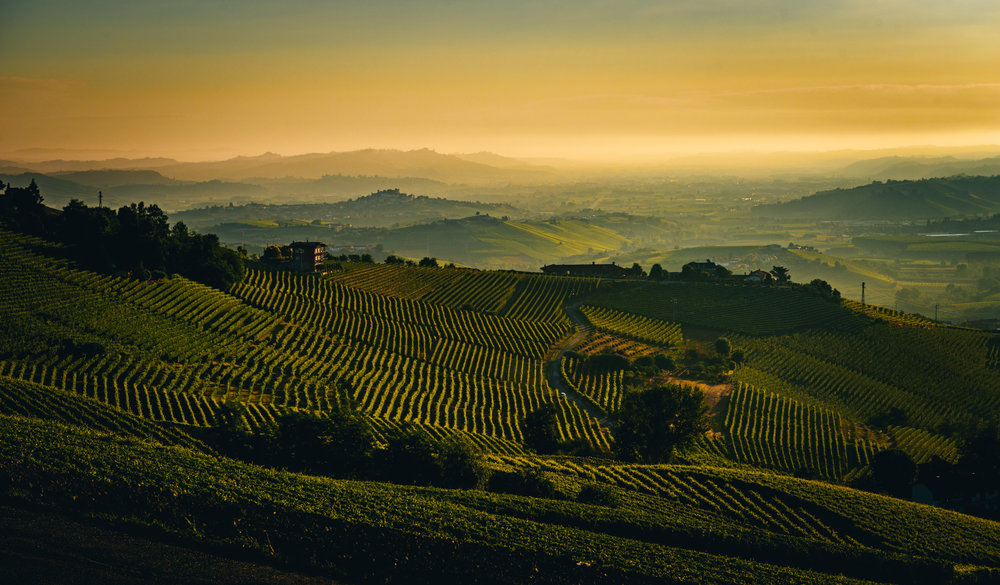 Italy : Piedmont : Sunrise over Barolo