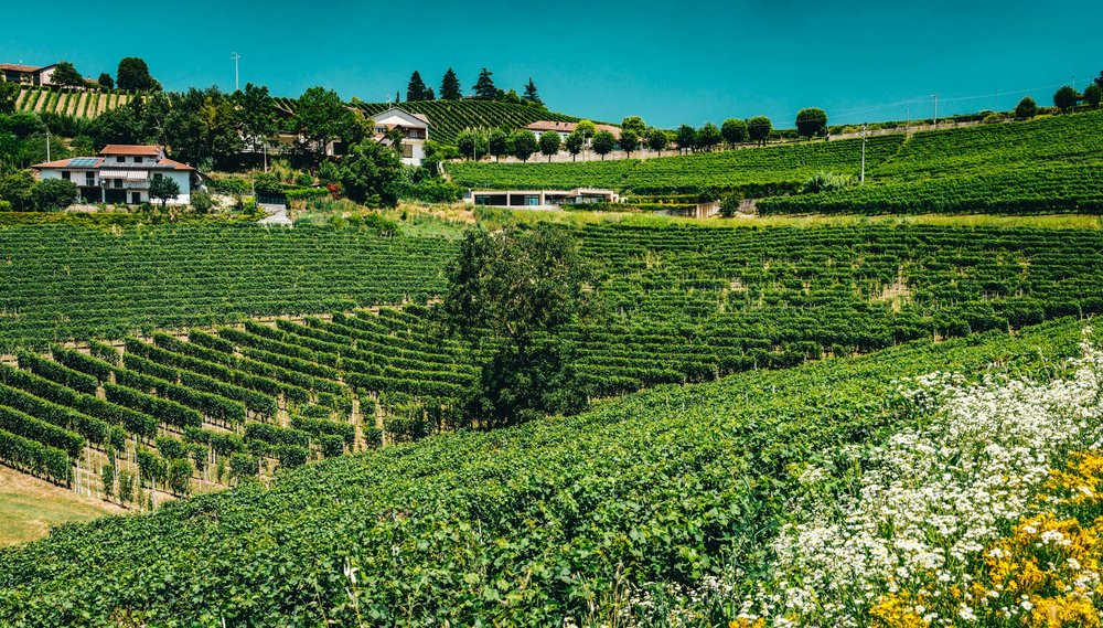 Italy : Piedmont : Secondine vineyard, Gaja's source for their Sori San Lorenzo bottling