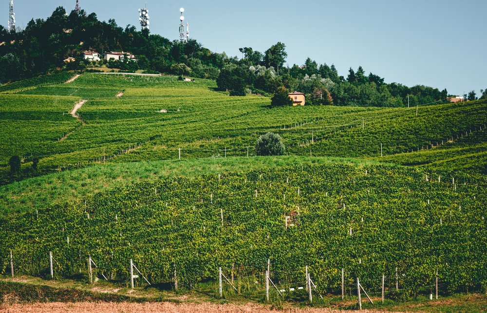 Italy : Piedmont : Brunate vineyard