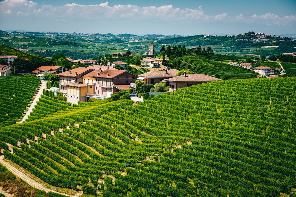 Italy : Piedmont : Rabaja vineyard and Barbaresco