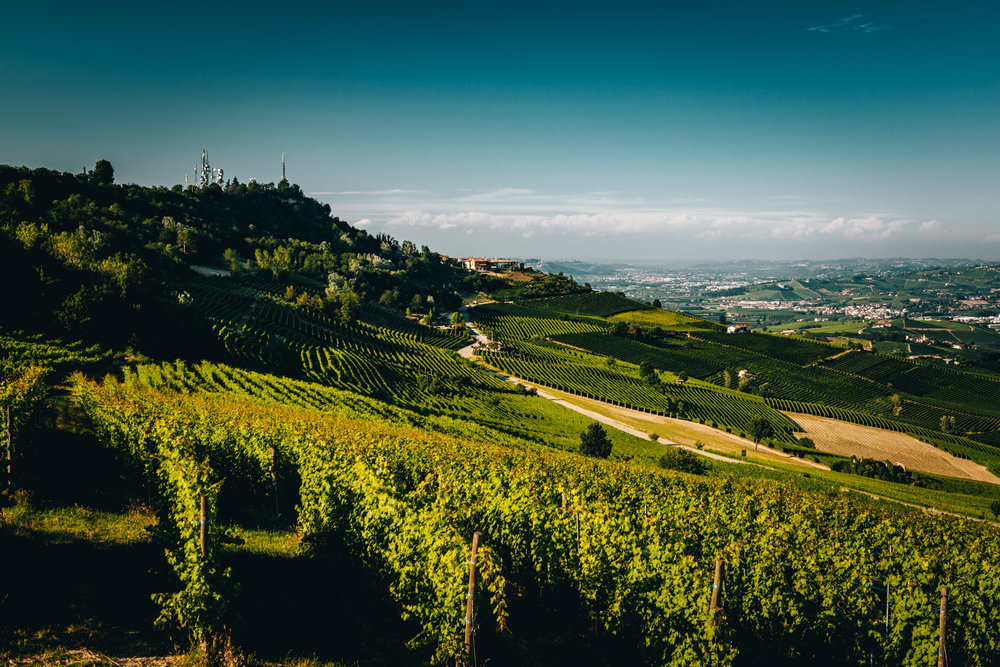 Italy : Piedmont : Standing in Bricco delle Viole in Barolo, looking back at La Morra