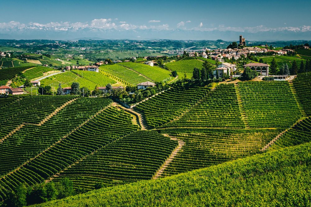 Italy : Piedmont : Bruno Giacosa's estate, Falletto vineyard, and Serralunga d'Alba in the distance