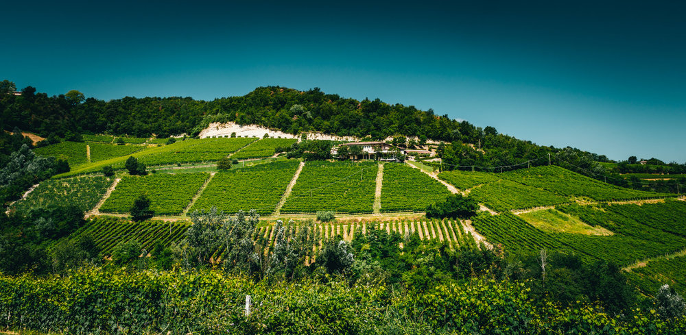 Italy : Piedmont : Elio Grasso's estate surrounded by Ginestra vineyard