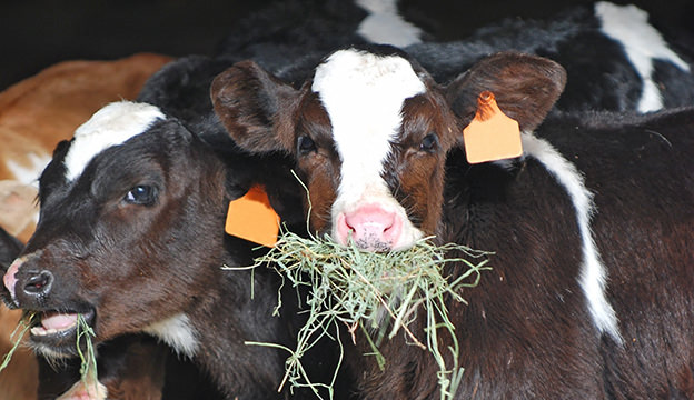 feed-hay_iStock-Thinkstock.jpg