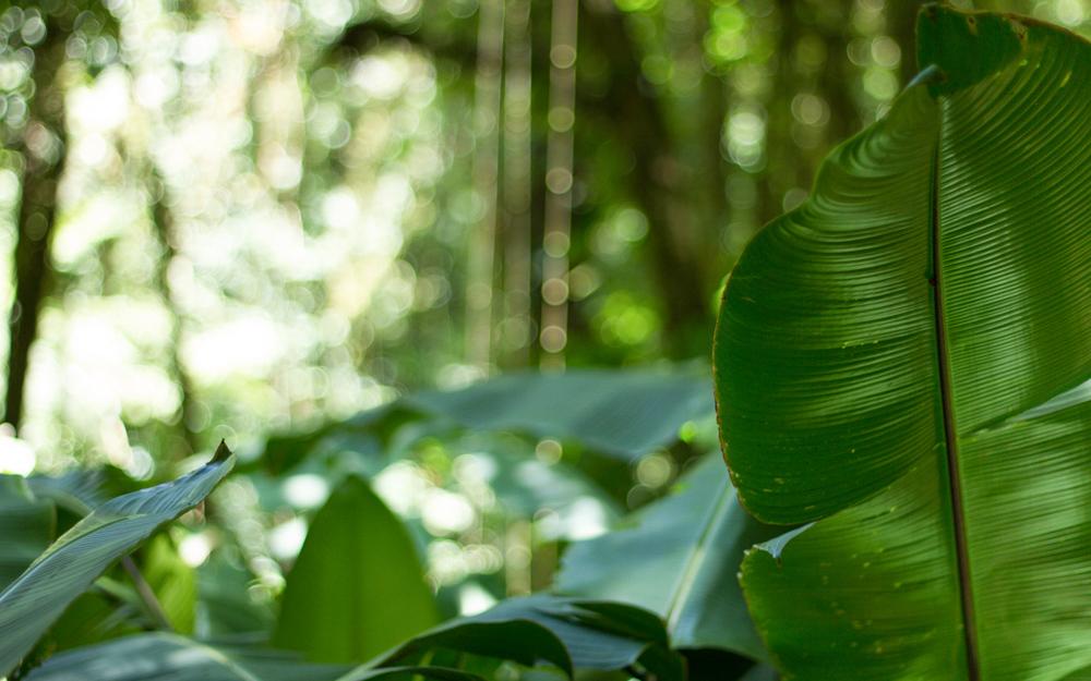 Christian-Schaffer-Costa-Rica-Jungle-003.jpg