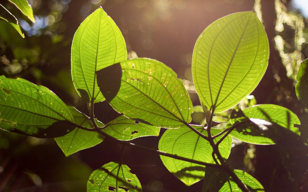 Christian-Schaffer-Costa-Rica-Jungle-002.jpg