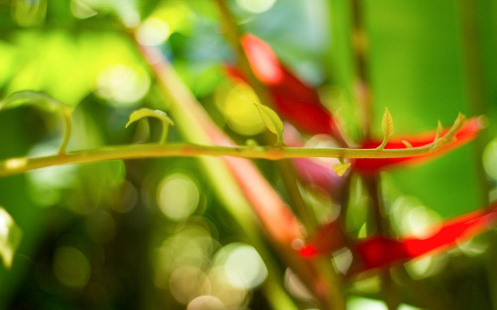 Christian-Schaffer-Costa-Rica-Jungle-005.jpg