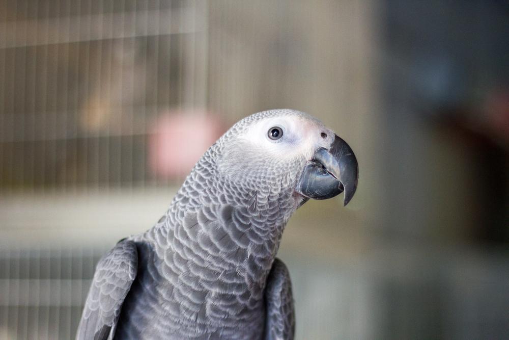Christian-Schaffer-Qatar-Doha-Souq-Bird-002.jpg
