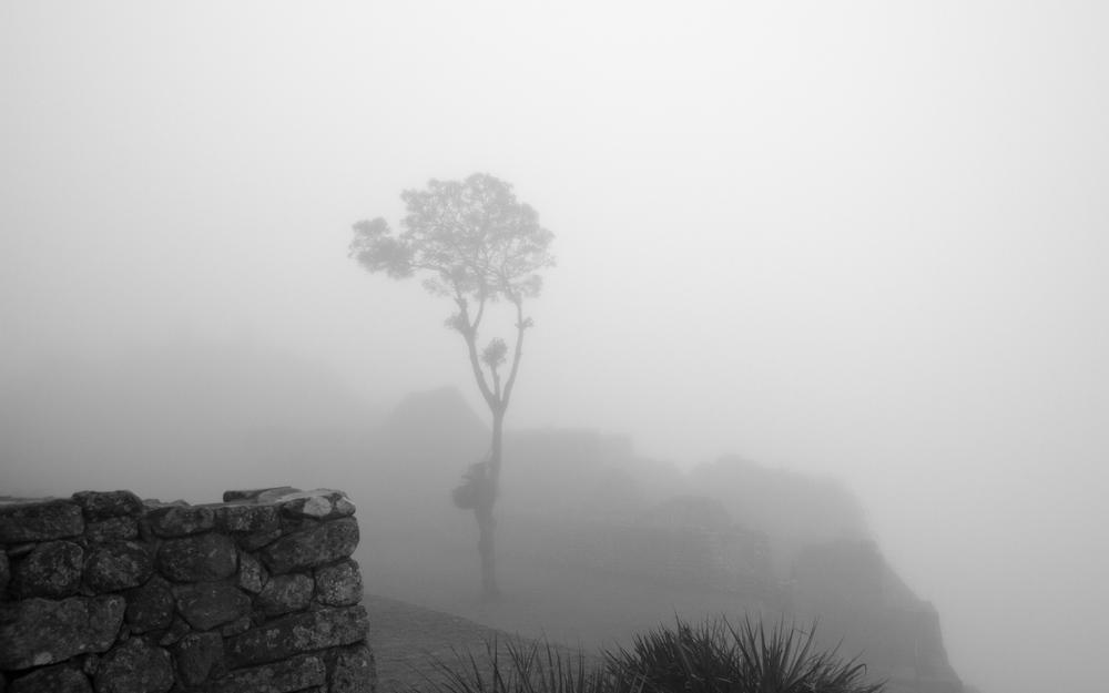 Christian-Schaffer-Peru-Machu-Picchu-Tree-Fog.jpg