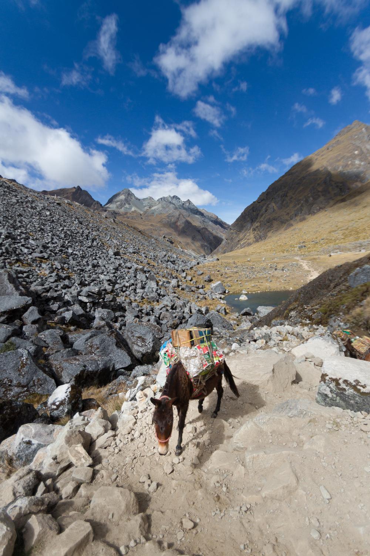Christian-Schaffer-Peru-Salkantay-Trek-Horse.jpg