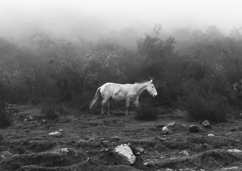 Justin-Dragon-Peru-White-Horse.jpg